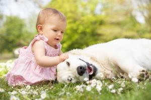 Psicoterapia infantil. Juegos con animales